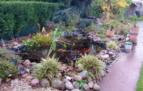 bassin-plantes