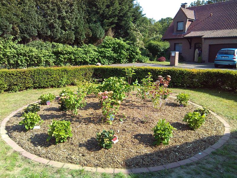massif-varié-d'-hortensias-halluin