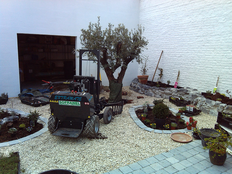 plantation-olivier-1tonne-lambersart